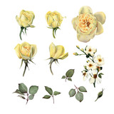 Roses, watercolor, can be used as greeting card, invitation card for wedding, birthday and other holiday and  summer background - 180968065
