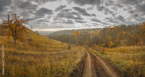 Foto op Aluminium Herfst Autumn landscape. View of the forest with yellow foliage against the background of a cloudy sky.