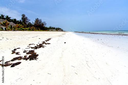 Foto op Aluminium Zanzibar seaweed beach in zanzibar