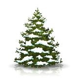 Christmas Pine Tree With Snow - 180981874