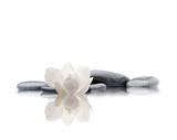 spa aislado de piedras flor y agua - 180988893
