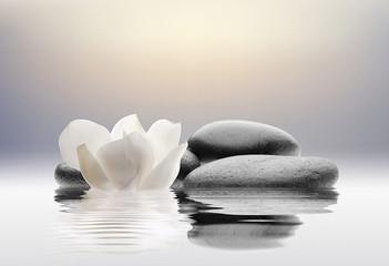 spa con flores agua y piedras