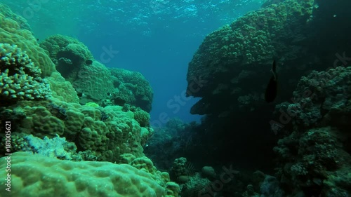beautifu coral canyon, Red sea, Marsa Alam, Abu Dabab, Egypt