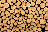 spruce logs structure - 181007619