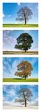 Vier Jahreszeiten - Collage - 181014863
