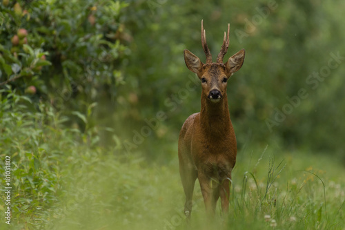 portrait of deer in the forest плакат