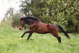 Pferd galoppiert - 181059417