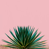 Plant on pink. Tropical design minimal fashion - 181063432