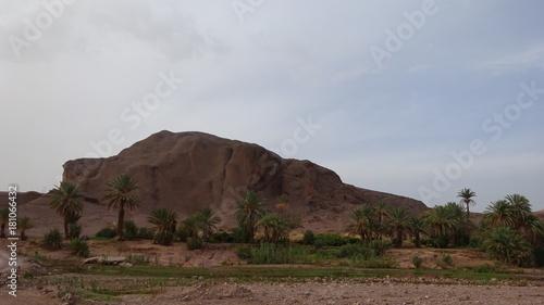 Fotobehang Diepbruine Oasis Ouarzazate Morocco