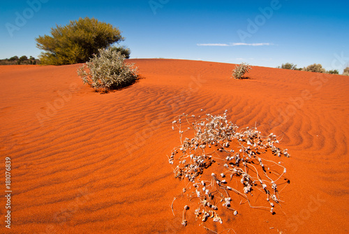 Fotobehang Baksteen Red sand dune and desert vegetation in central Australia