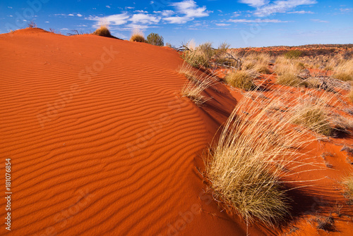 Foto op Canvas Rood traf. Red sand dunes and desert vegetation in central Australia
