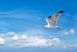 Big seagull in sky - 181081845