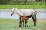 horse and foal - 181093652