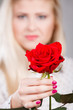 woman holding red rose in hand