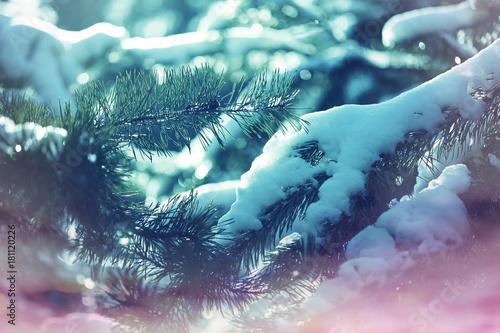 Fotobehang Winterlandschap Frozen tree