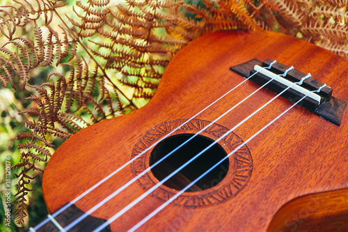 Ukulele guitar at the mountain nature autumn dry yellow grass. Photo depicts musical instrument Ukulele small guitar, outdoor natural fall background. Strings close up. Macro view. - 181120876