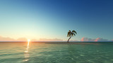 One palm tree on sunset island 3D render