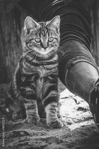 pussy-kitty