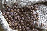 COFFEE SEEDS -Photo - 181135693
