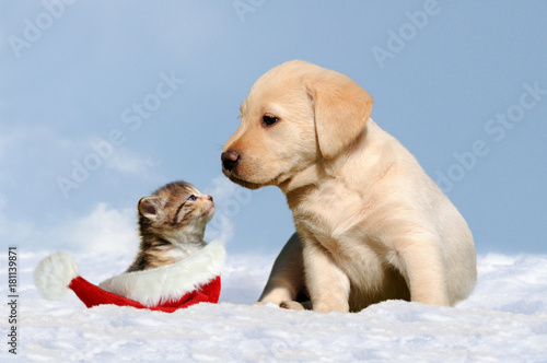 dog and cat in the snow Poster