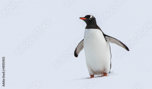 Plexiglas Antarctica Happy Penguin