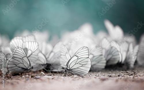 Fotobehang Vlinder Invasion of butterflies. Unique photography.