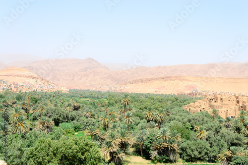 Foto op Canvas Olijf Todgha gorge with date palms, Morocco