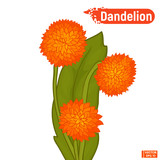 Colorful dandelion flower sketch