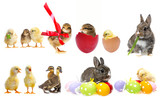 easter eggs and chickens and rabbits and ducklings isolated on a white background - collection of spring animals - 181165865