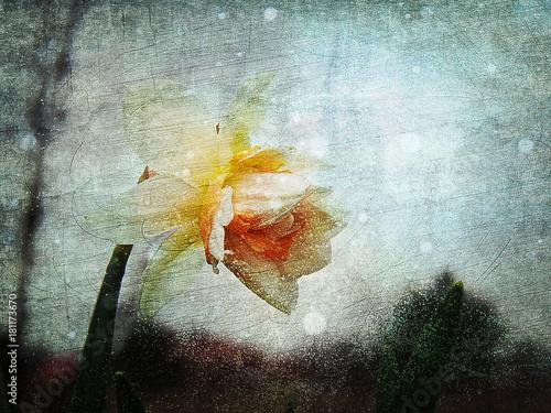 Fototapeta kwiat wiosny narcyz na abstrakcyjnym tle