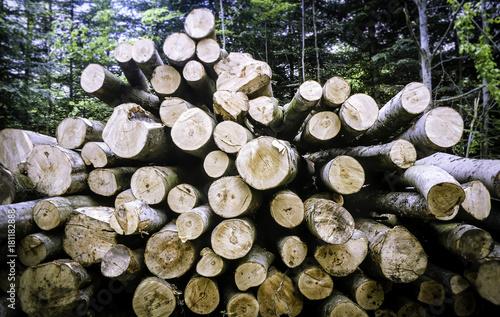 Deurstickers Brandhout textuur Gestapelte Baumstämme in einem Wald