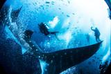 Whale Shark from the Galapagos Islands Ecuador SCUBA diving - 181185814