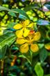 Leinwanddruck Bild - Gelbe Blueten mit gruenen blaettern