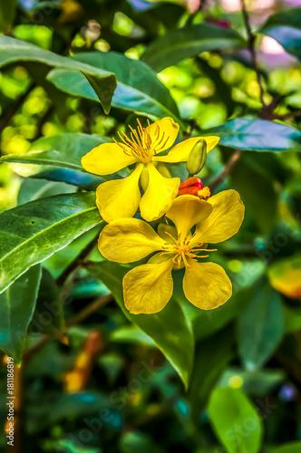 Leinwanddruck Bild Gelbe Blueten mit gruenen blaettern