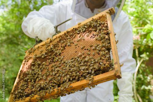 Fotobehang Bee Swarm of bees on frame