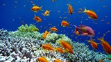 Diving. Tropical fish and coral reef. Underwater life in the ocean.  - 181216668