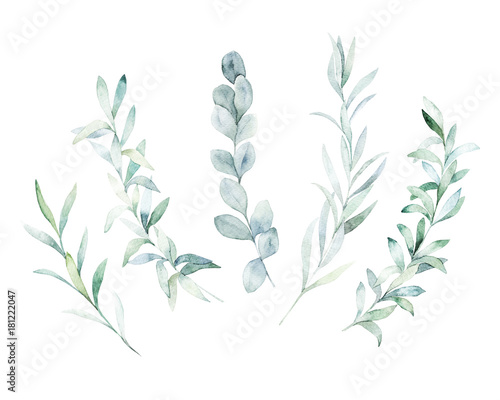 Poster Watercolor floral set. Hand drawn isolated illustration. Botanical art background
