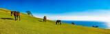 野生馬の草原 - 181228422