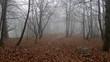 Bosco in inverno giornata di nebbia e gelo