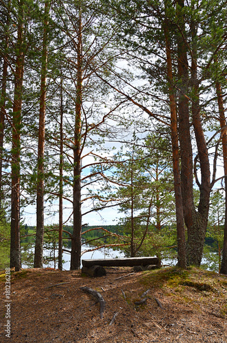 Fotobehang Zomer Viewing place. Resting place on high, in the middle of pine trees, by the river of Oulujoki, Vaala.