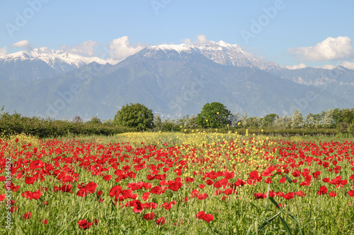 Staande foto Klaprozen Der Olymp im Frühling, Mount Olympus