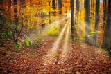 Wald im Herbst mit Sonnenstrahlen