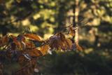 Orangenes Laub Im Herbst