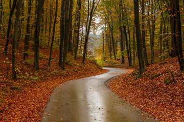 Narrow street on a rainy autumn day in the Tricity Landscape Park, Gdansk, Poland