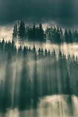 Sun shining through fog in the forest on mountain slopes