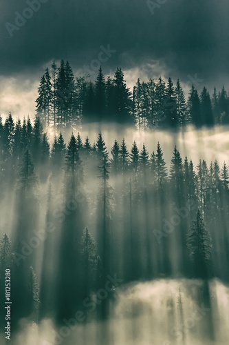 Sun shining through fog in the forest on mountain slopes - 181253280