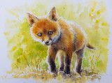 Watercolors painted portrait of cute, young fox.