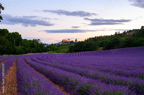 Tuinposter Lavendel Champ de lavande en Provence, France. Coucher de soleil. Châteu de Gréoux-les-Bains en arrière-plan.