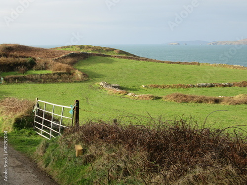 In de dag Pistache Green fields on coastal landscape in Ireland