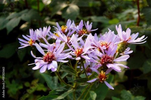 Plexiglas Azalea Purple Flowers